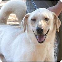 Labrador Retriever Dog for adoption in Baton Rouge, Louisiana - Horton