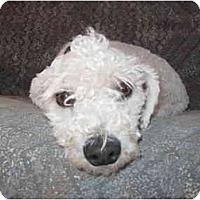 Adopt A Pet :: Toby - Albuquerque, NM