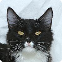 Adopt A Pet :: Skittles M - Sacramento, CA