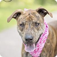 Adopt A Pet :: Lady - Kingwood, TX
