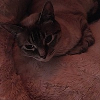 Adopt A Pet :: Lucy - Lauderhill, FL