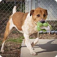 Adopt A Pet :: Cali - Lincolnton, NC