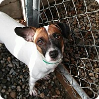 Adopt A Pet :: Alaisha - Freeport, ME