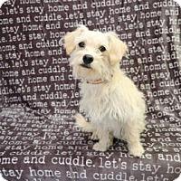 Adopt A Pet :: Shawn - Yucaipa, CA