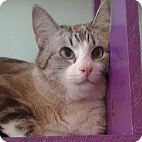 Adopt A Pet :: Oliver - Brimfield, MA