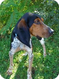 Bluetick Coonhound Mix Dog for adoption in Jackson, Michigan - Earl