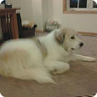 Adopt A Pet :: Sully - Minneapolis, MN