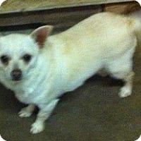 Adopt A Pet :: Bruce - Temecula, CA