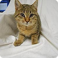 Adopt A Pet :: Darla - Maywood, NJ