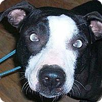 Adopt A Pet :: Ryachu - Groveport, OH