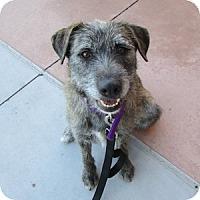 Adopt A Pet :: Magnolia - Gilbert, AZ