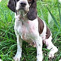 Adopt A Pet :: Ozzie - Sugarland, TX