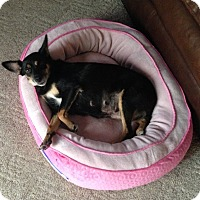 Adopt A Pet :: China-Prison Obedience Trained - Hazard, KY