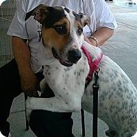Adopt A Pet :: Mozart - Miami, FL
