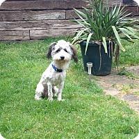 Adopt A Pet :: Toby - Tillamook, OR