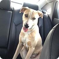 Terrier (Unknown Type, Medium) Mix Dog for adoption in Maquoketa, Iowa - Heaven