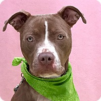 Adopt A Pet :: Dolly - Evansville, IN