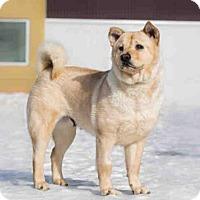 Adopt A Pet :: GIRL - Palmer, AK