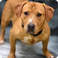 Adopt A Pet :: Dycember - Newnan City, GA