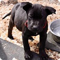 Adopt A Pet :: Molly - Roxboro, NC