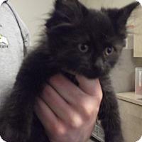 Adopt A Pet :: SNICKERS - Cheboygan, MI