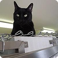 Adopt A Pet :: Fievel - House Springs, MO