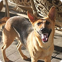 Adopt A Pet :: Lucie - La Habra Heights, CA
