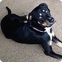 Adopt A Pet :: June - Orlando, FL