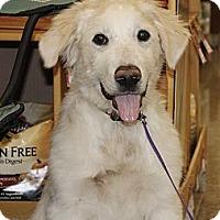 Adopt A Pet :: Jax  *Adopted - Oklahoma City, OK