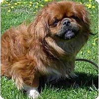Adopt A Pet :: Duffy - Mays Landing, NJ