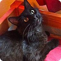 Adopt A Pet :: Howard - Escondido, CA