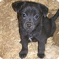 Adopt A Pet :: Raney - Glastonbury, CT