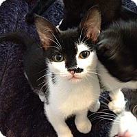 Adopt A Pet :: Renny - Waxhaw, NC