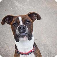 Adopt A Pet :: Karl The Super Model - Video - Houston, TX