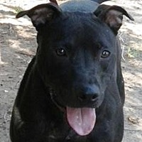 Adopt A Pet :: Piper - Yukon, OK