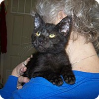 Adopt A Pet :: Clawsby - Picayune, MS
