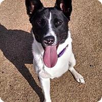 Adopt A Pet :: Nellie - Bogart, GA