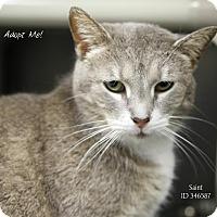 Adopt A Pet :: Saint - Camden, DE