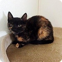 Adopt A Pet :: Tori - Lathrop, CA