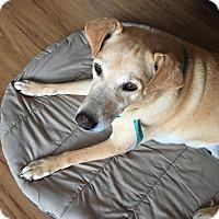 Adopt A Pet :: Lucky *Adoption Pending* - Guelph, ON