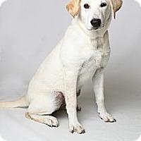 Adopt A Pet :: Rikka Pup - Danbury, CT