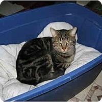 Adopt A Pet :: Romeo - Terre Haute, IN