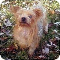 Adopt A Pet :: Miley - Phoenix, AZ