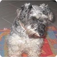 Adopt A Pet :: Flo - Rigaud, QC