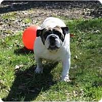 Adopt A Pet :: Angel - Winder, GA