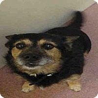 Adopt A Pet :: OTTO - Ogden, UT