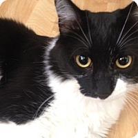 Adopt A Pet :: Tonto - San Ramon, CA