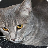 Adopt A Pet :: Stacey @ Roswell - McDonough, GA