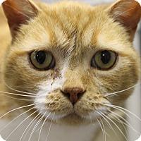 Adopt A Pet :: Lissi - Medina, OH