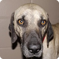 Adopt A Pet :: Sampson - Foster Care - Oxford, MS